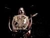 behemoth-02-2014-09
